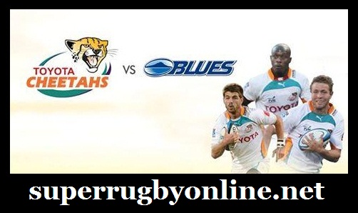 Cheetahs vs Blues live